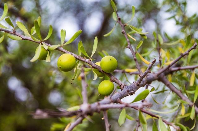 huile d'argan bio naturelle pure