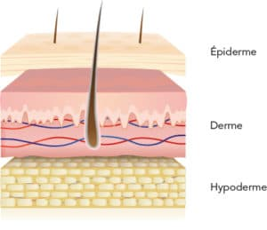 peau epiderme
