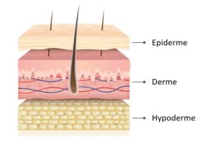 couche de la peau